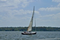 2014 O.L. Shultz Alive Hospice Cruiser Regatta - J/100 (seantheriot) Tags: old lake club sailboat island harbor sailing nashville yacht tennessee regatta hickory j100 hiyc