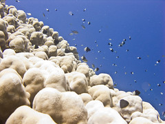 corals (HongKongPhooey2009) Tags: fish coral canon shark boat underwater stingray dolphin redsea egypt scuba clam cave diver eel reef sponge manta moray hammerhead