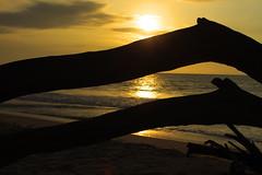 Troncos (Gaby Fil ) Tags: atardecer per playas ocasos sudamrica caminoinca tumbes zorritos costanortedeper chapaqan