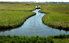 Landscape near Durgerdam_5-5-16 (kees.stoof) Tags: amsterdam landscape durgerdam ijburg landschap noord amsterdamnoord