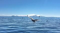 Snfellsjkull (Tabergid) Tags: sea birds landscape iceland sunny glacier snfellsjkull breiafjrur iphonography