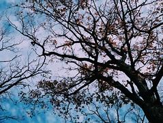 2015-11-10 07.19.37 1 (anastasiya_klenyaeva) Tags: trees sky nature russia autmn     saratov vsco vscocam vscorussia vscosaratov