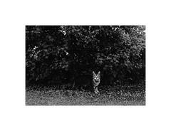 cat on the road (Marek Pupk) Tags: life road blackandwhite bw film monochrome analog cat europe central documentary slovakia canon5