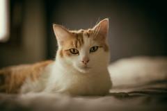 Witte (Dirk Bruyns) Tags: cat canon 50mm kat chat neko katze lightroom f12 presets 50l 1dsmk2