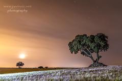 Noches de verano (javiruiz) Tags: nightphotography noche nocturna nubes luna estrellas stars lupiana afgu arbol ocre naranja paisaje