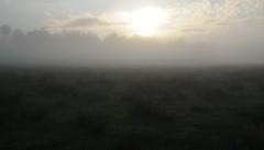 Sonnenaufgang in der Ossenvenne; Norderstapel, Stapelholm (10) (Chironius) Tags: stapelholm norderstapel schleswigholstein deutschland germany allemagne alemania germania    ogie pomie szlezwigholsztyn niemcy pomienie morgendmmerung sonnenaufgang morgengrauen  morgen morning dawn sunrise matin aube mattina alba ochtend dageraad zonsopgang   amanecer morgens dmmerung nebel fog brouillard niebla