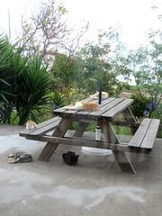 IMG_1761 (Chat Malicieux) Tags: cats table siesta tisch katzen ktzchen