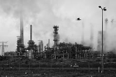 Oil refinery (frank formsache) Tags: gasoline kerosene petroleum europoort heatingoil dieselfuel asphaltbase industrialprocessplantwherecrudeoilisprocessedandrefinedintomoreusefulproductssuchaspetroleumnaphtha