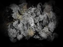 170616-5-1 (chrisfriel) Tags: flowers grave memorial friel