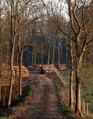 Stacked Timber in Geddington Grange Woods (Ninja Dog - 忍者犬) Tags: trees england nature woodland spring woods scenery northamptonshire newton 2012 d80 geddington nohdr