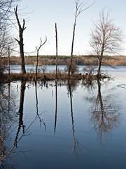 Kenoza Lake (Boneil Photography) Tags: canon reflections ma silhouettes powershot g6 haverhill kenozalake boneilphotography brendanoneil