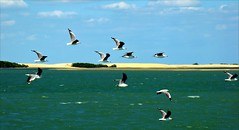 Freedom (Serlunar (tks for 6.0 million views)) Tags: natal flickr the4elements flickrduel serlunar