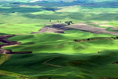 Palouse Hills (Cole Chase Photography) Tags: summer green canon washington pacificnorthwest washingtonstate rollinghills t3i palouse palousehills steptoebutte steptoebuttestatepark thepalouse