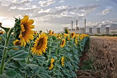 (jo.gr) Tags: field sunflower powerplant
