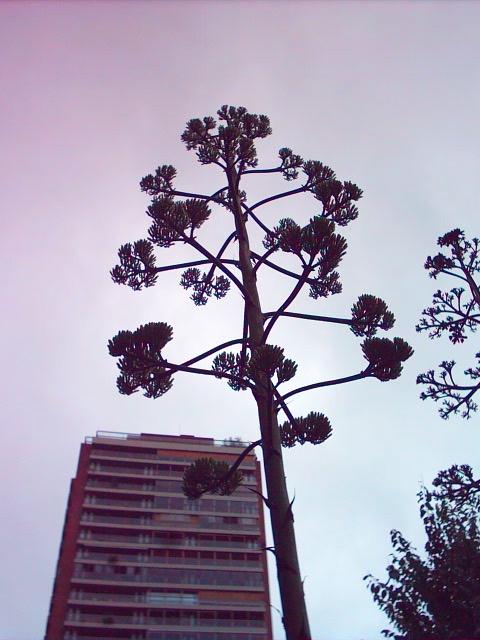 planta BsAs 04