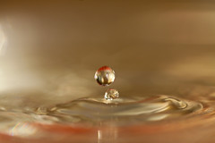 Gravitation universelle (Orpinbleu) Tags: light macro nature water speed canon garden daylight photo energy eau flickr force time photos corse lumire or space corsica jardin images drop galerie h2o falling gravity zen makes mass temps liquid soe chute espace goutte attraction 2012 2a onde gravitation vitesse lumen liquide macrophotography lumirenaturelle photogallery masse leau dropofwater gravit mfcc gouttedeau corsedusud gouttesdeau greatphotographers nergie macrophotographie 2013 gravitational innamoramento macrodrops macrodroplets gravitationuniverselle orpinbleu february2013 fvrier2013 anneinternationalepourlacooprationdansledomainedeleau2013 internationalyearforcooperationinthefieldofwaterpolicy2013 orpinbleumacrozen albumgouttesdeauorpinbleu photoalbumdropsofwaterorpinbleu gouttesdepluieetderose