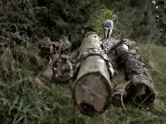Benni 454 (Joerg Marx) Tags: trees dog forest hund wald bäume highqualitydogs highqualityanimals