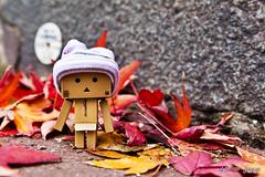 Autumn is coming (Nicolas Paumard) Tags: cute toy figurine cardbord danbo revoltech danboard quotidan nicolaspaumardphotography