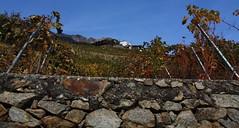 vignes (bulbocode909) Tags: automne rouge suisse bleu vignes valais tassonières