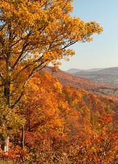 Ozark Fall Color (Amy Hudechek Photography) Tags: trees fall forest fallcolor arkansas scenicroute7 mygearandme mygearandmepremium topphotospots tpslandscape
