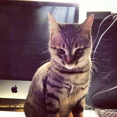 (Lucifero Mheta) Tags: cat felini gatti micio gattini