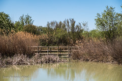 Balsa del Cascarro, La Alfranca (Jose Antonio Abad) Tags: park parque espaa ro river garden puente lago spain paisaje zaragoza ebro lanscape aragn laalfranca josantonioabad