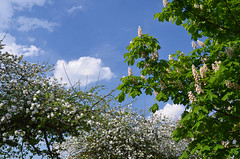 Apple blossom (malinowy) Tags: bird birds nikon tit tits belgium belgique belgie nest nikkor brabant greattit 1870 vlaams ptaki fledgeling belgia sikora sikorka bogatka huldenberg malinowy d7000 malinowynet