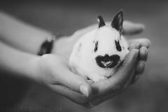 2 Weeks (Dynamutt) Tags: rabbit bunny englishspot