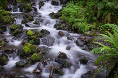 Green! (rubenparra78) Tags: longexposure fern green flow waterfall washington nps pacificnorthwest olympicnationalpark silky hohrainforest