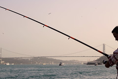Istanbul (asliakal) Tags: istanbul turkiye turkey fishing bosphorus marmara sea man bridge canon color 50mm bird boat