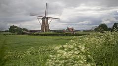 the mill of Zuidzande (Niek Goossen) Tags: mill thenetherlands wolken zeeland molen zeeuwsvlaanderen fluitekruid zuidzande