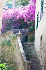 Cinque Terre IMG_9360 (Herb Nestler) Tags: italy cinqueterre monterosso italianriviera