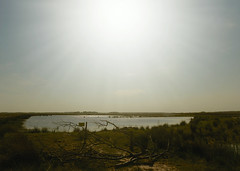Oasis in the wasteland (andzwe) Tags: dwingelderveld oasis heat sun wasteland panasoniclumixdmcgh4 kaal tak branch dor verlaten deserted hitte heatwave dry dust levelland jamesmcmurtry panasonicdmcgh4