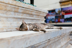 Sleeping in Thailand (ChefChoiArdee) Tags: thailand cat temple sleep rx1rii