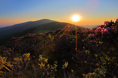 Roan Highlands' Glory (i_am_durin) Tags: sunset bald northcarolina rhododendron roan northcarolinamountains canon24105f4 roundbald canon1635mmf28 roanhighlands durinsday canon6d janebald