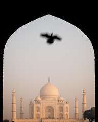 Are You Curious? (DEARTH !) Tags: travel india bird history monument silhouette architecture tajmahal agra mausoleum frame framing dearth in uttarpradesh sevenwondersoftheworld