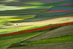 Colors ((Elio Ausili)) Tags: landscape nikon colors italy nature