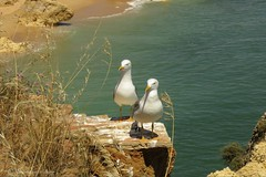 Kokkie en Peppie :-) of Peppie en Kokkie ? (Manon van der Burg) Tags: sea bird sunshine canon vakantie rocks close gulls duo relaxing summertime algarve meeuwen rotsen birdphotography aaibaar sx60 powerrrrshot