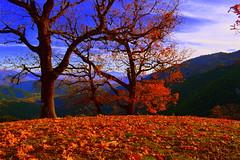Autumn view (konstantin45) Tags: autumn tree view greece greek landscape nature sky ipeiros preveza mountain light