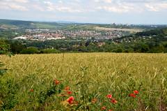 Wrzburg-Heidingsfeld (diwe39) Tags: felder wrzburg mohn sommer2016