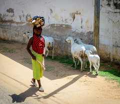 Girl carrying wood (I. Oosterlinck) Tags: girl nikon sheep afrika firewood carry d500 thegambia 2016