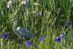 11Yamada Pond Park (anglo10) Tags: flower japan