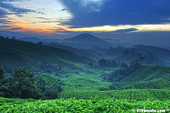 Sg Palas Tea Plantation (2121studio) Tags: cameronhighlands sgpalasteaplantation
