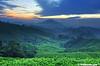 Sg Palas Tea Plantation (2121studio) Tags: cameronhighlands sgpalasteaplantation