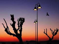 Tramonto su Capo Caccia - Alghero (antonè) Tags: alghero capocaccia faro alberi tramonto cielo mare sardegna antonè saariysqualitypictures angolidisardegna natureinfocusgroup