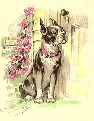 boston terrier (Adair733) Tags: vintage card greeting