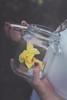 Roses (Danielle Pearce) Tags: old girl rose canon vintage outside close mark ii jar 5d