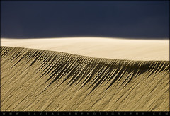 The Edge - Jockeys Ridge State Park NC Minimalism (Dave Allen Photography) Tags: nature lines landscape outdoors landscapes nc sand nikon angle natural dunes northcarolina professional hatteras telephoto nagshead edge sandstorm cape minimalism eastern outerbanks seashore f8 minimalist sanddunes obx eastcoast daveallen capehatteras jockeysridge 70200mm carolinas outerbanksnc d700 mygearandme
