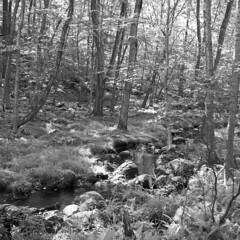 Just a stream in the forest (visible-spectrum) Tags: newyork harriman hudsonvalley suffern colorskopar perkeoii pipc nysland