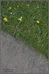 the grass on the other side (ginger_scallywag) Tags: bridge flowers trees reflection church water childhood canon garden tv hawk owl pingu billandben teletubbies ripon mrmen stiching thorpperrow bedale stgregory cs5 eos40d
